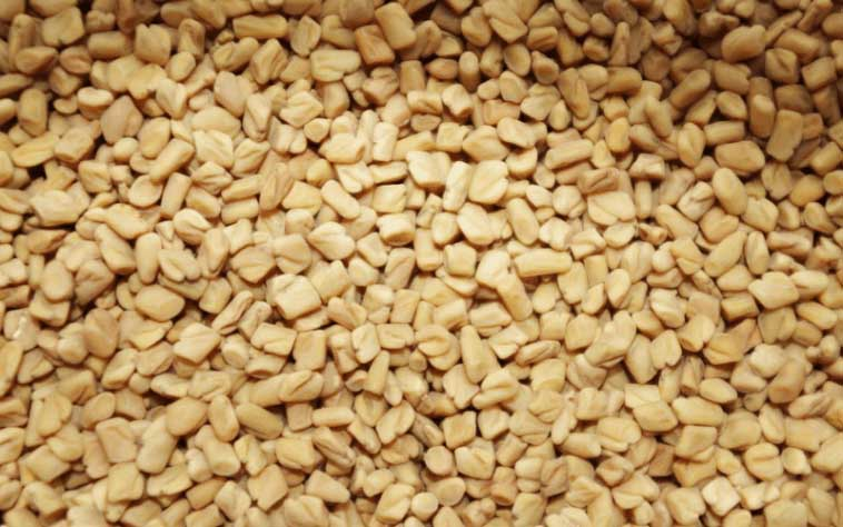 Fenugreek seeds benefits in diabetes