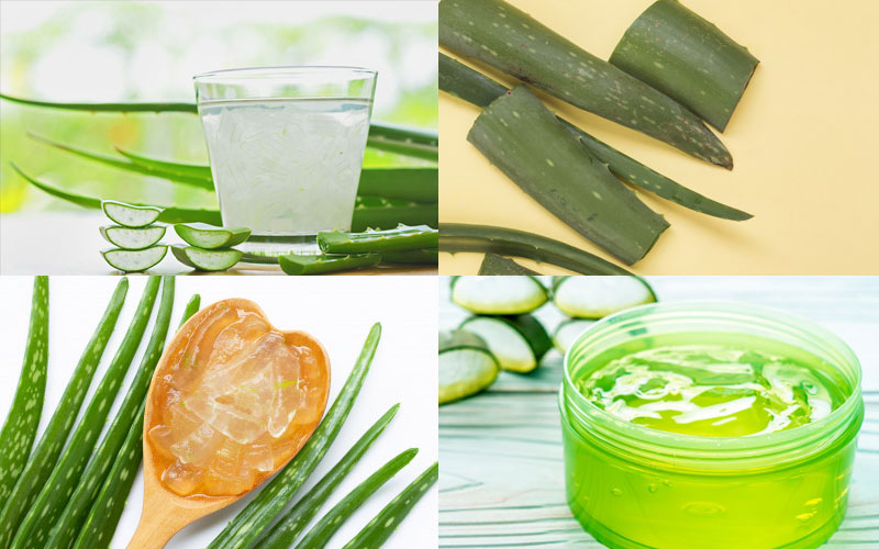 Aloe Vera in our daily life