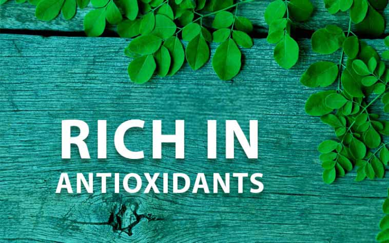 Moringa oleifera Is Rich in Antioxidants