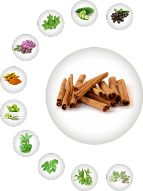 Cinnamon - Ayurvedic Herb for Diabetes, Natural Herbs for Diabetes, Sugar Knocker Ingredient, Herbs for Diabetes, Best Herbal Medicine for Diabetes