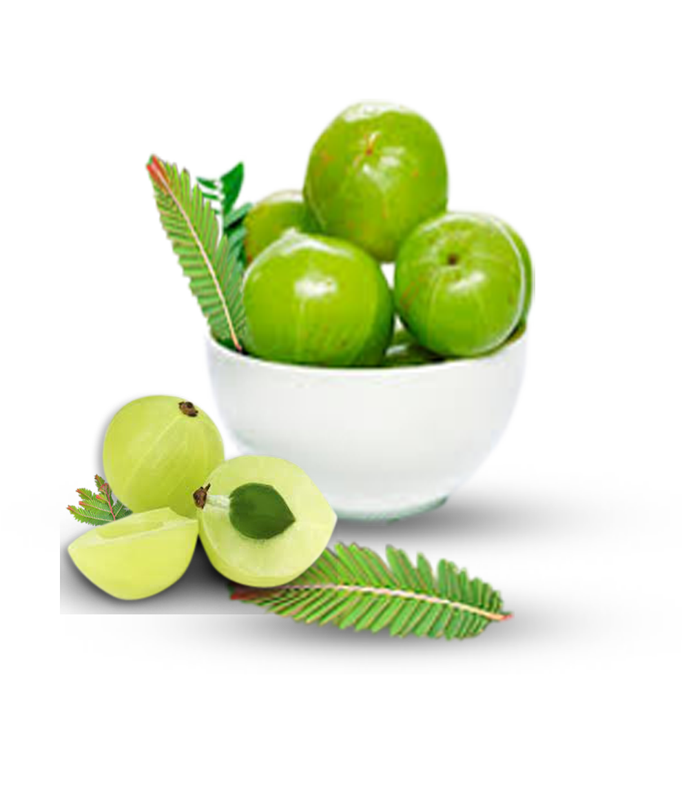 AMLA - medicinal herbs for diabetes, herb with medicinal properties for diabetes